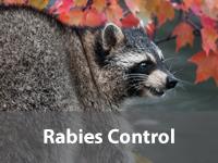 Rabies Control